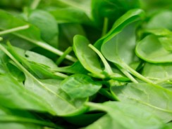 5 Excellent Health Benefits of Spinach
